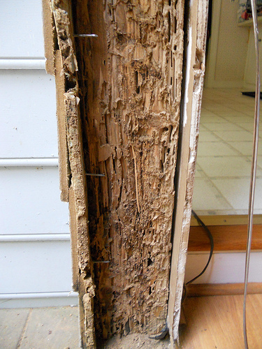 wood damaged by termites
